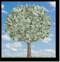 pohon duit
