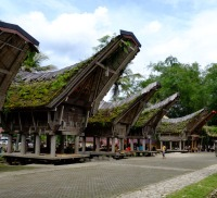 TorajaTrip