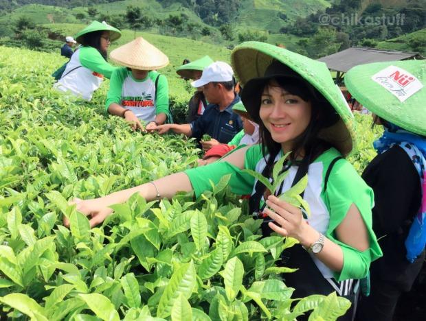 metik daun teh