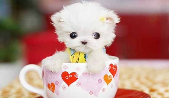 http://sanjayjadhav.deviantart.com/art/cute-puppy-201142527