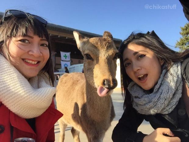 selfie bersama rusa